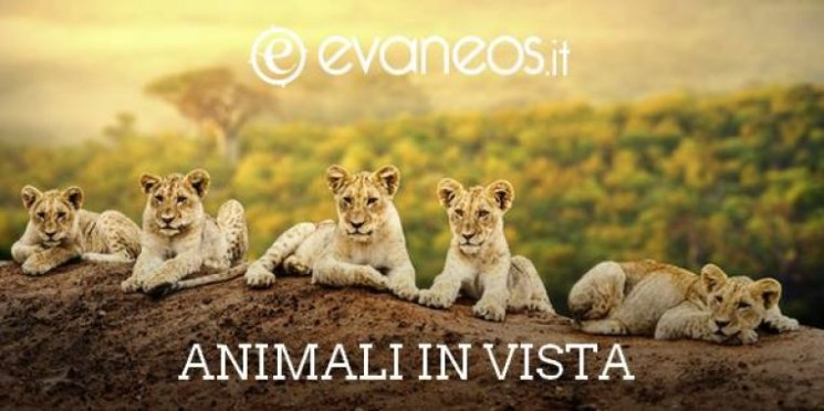 ANIMALI IN VISTA!
