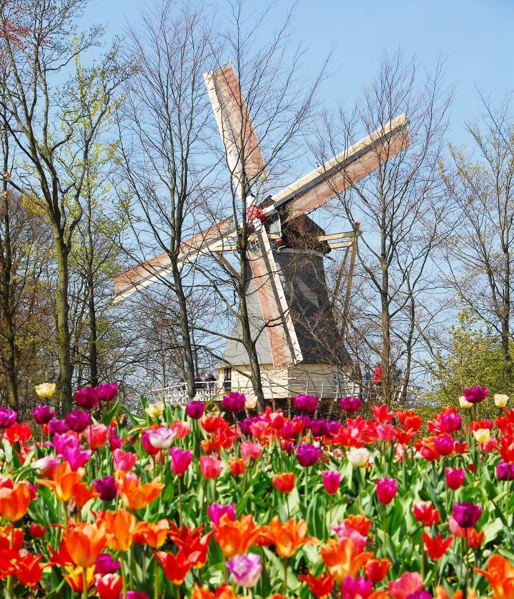 Lisse (Paesi Bassi): Apre dal 24 marzo al 16 maggio Keukenhof, il più bel parco floreale al mondo