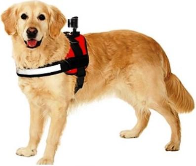 Activeon lancia la nuova 360 Dog Vest per gli amici a quattro zampe