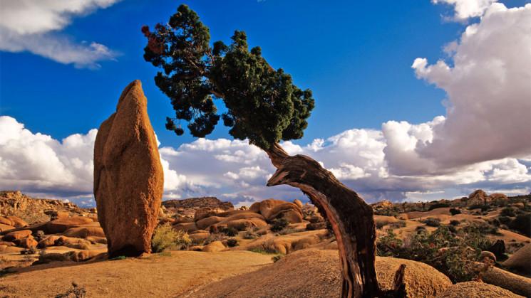I Parchi della California dove storia, cultura e natura si incontrano
