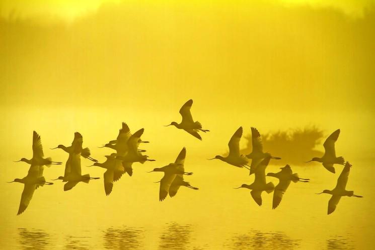 A MUSA di Cervia le immagini suggestive del Parco del Delta del Po