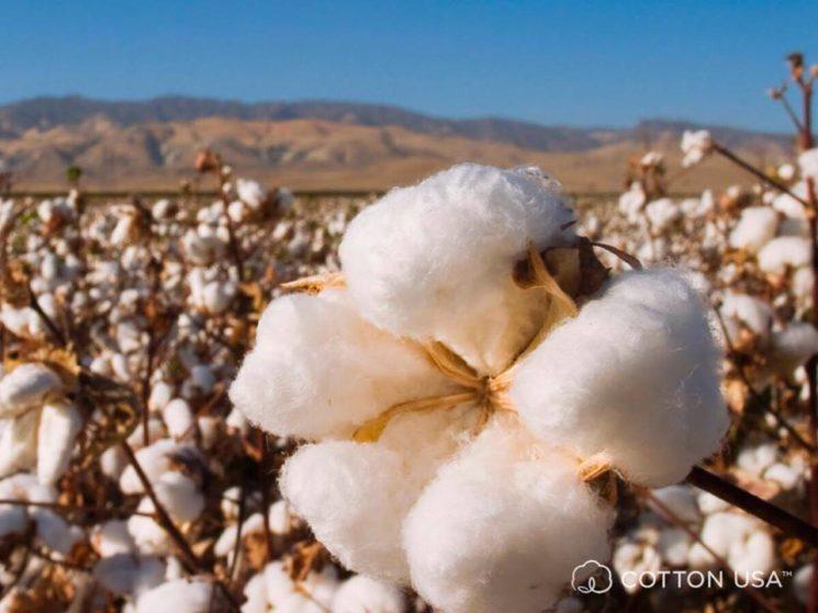 Cotton USA rivela: le aziende tessili moda e casa italiane puntano su tracciabilità e qualità