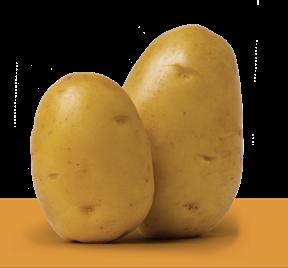 """Patata di Bologna D.O.P. si rinnova:   nuova immagine e nuova campagna di un prodotto """"esclusivo"""""""