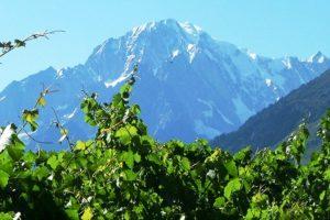 Vini della Valle d'Aosta, una regione pronta a stupire