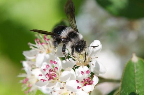 20 maggio prima Giornata mondiale delle api