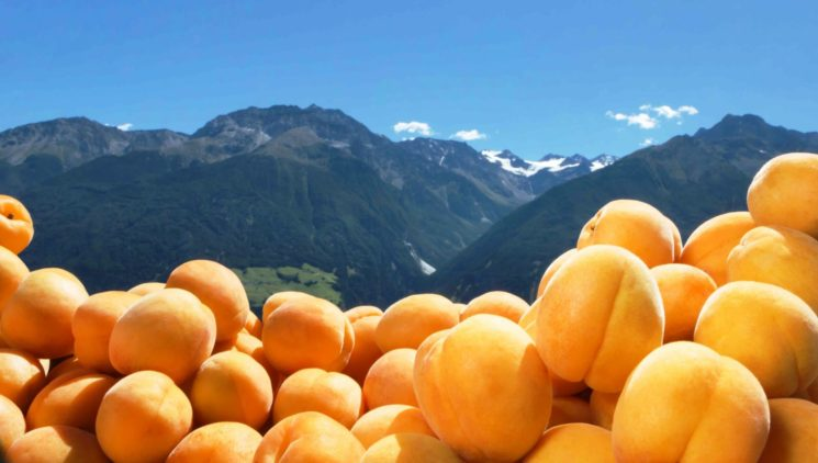 Festa del Marmo e delle Albicocche a Lasa – Val Venosta (BZ) il 4 e 5 agosto