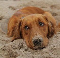 """Spiagge per cani"": giornate formative promosse da Boehringer Ingelheim Animal Health"