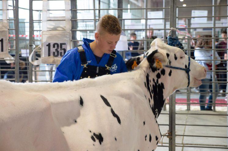 Più litri di latte venduto negli allevamenti con alto benessere animale
