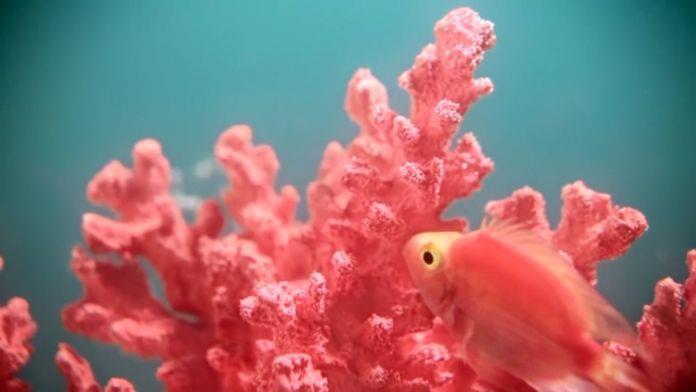 reisenthel e Zava in living coral colore Pantone 2019