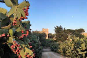 Borgo Valle Rita, un angolo di paradiso in Alta Murgia