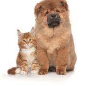 GUNA – L'approccio nutrizionale integrato in ambito veterinario
