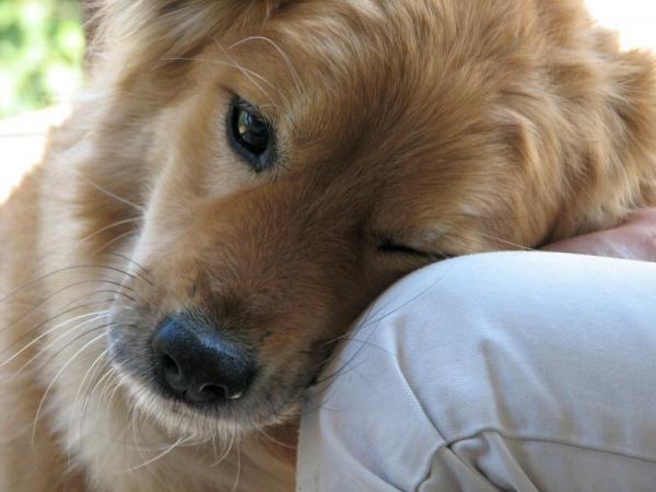 International Dog Day. I benefici di un cane in famiglia