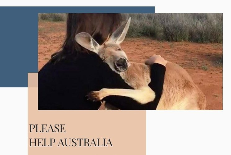 My Boutonnière per l'Australian Animal Rescue Inc.