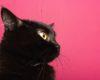 I gatti conquistano il web