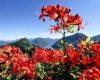 In Canton Ticino fioriscono parchi e giardini