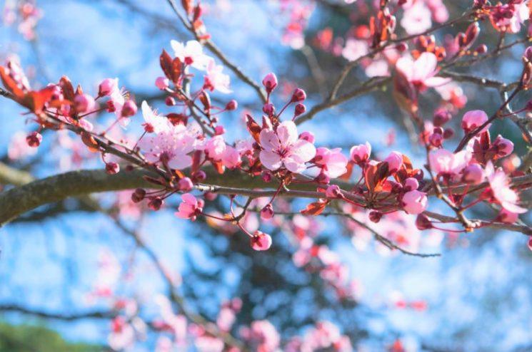La primavera sboccia sulla pelle con Bioline Jatò