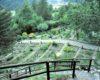 Riaprono gli orti botanici lombardi con nuove modalità di fruizione
