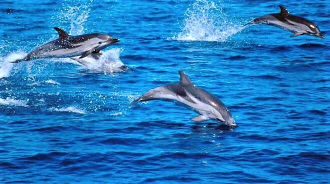 Al Santuario Internazionale dei Cetacei per ammirare i delfini