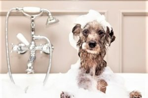 D.DOG Pet Beauty: novità per la toelettatura dei cani