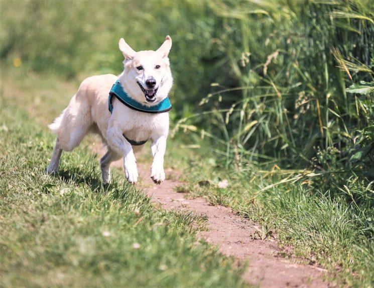 Animali in estate: i consigli dei veterinari MyLav