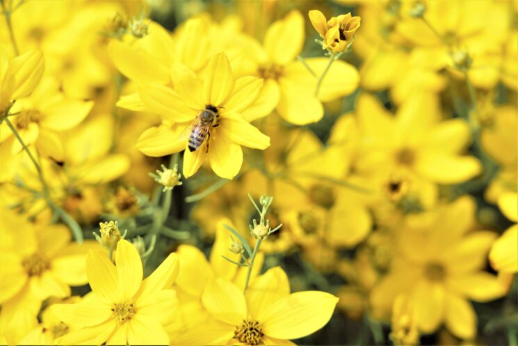 Ricola per le api insieme a Slow Food e ai Mieli di Alta Montagna Alpina del Presidio