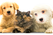 """Shampoo Igienizzante Dermoprotettivo ElsaBeauty"", dermocosmesi per pets"