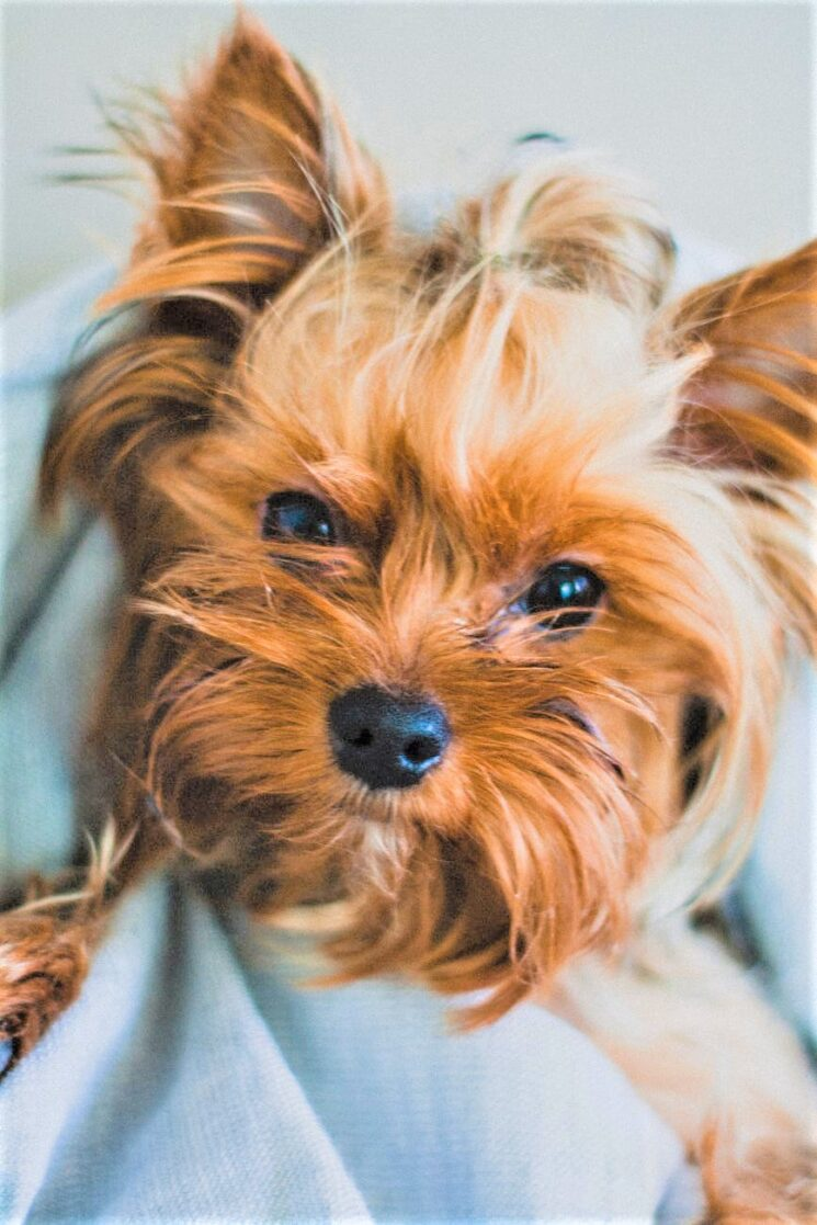 ElsaBeauty Dermocosmesis for Pets: online il sito ufficiale