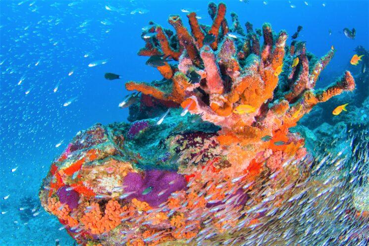 Alle Seychelles attività ecoturistiche uniche