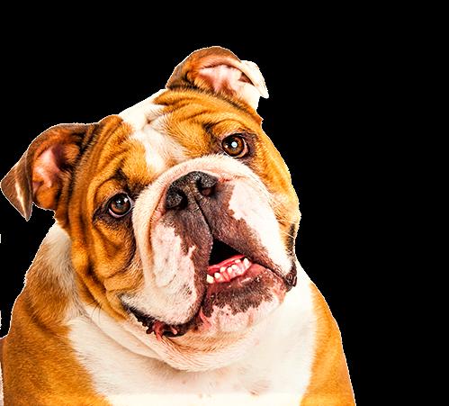 ElsaBeauty Dermocosmesy for Pets : Polvere Igienizzante Lenitiva Anti irritazioni ed arrossamenti