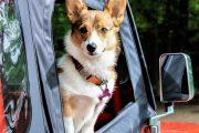 Viaggiare con i nostri pets: cosa bisogna sapere