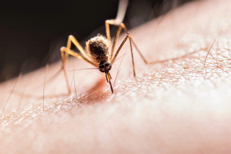 Henkel VAPE – Bollettino del viaggiatore: misure di prevenzione West Nile Virus 2021